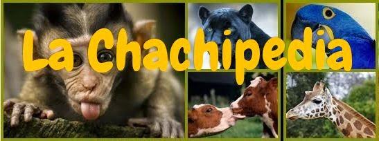Enciclopedia infantil de animales