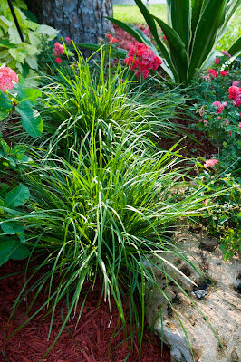 Ozbreed New Plant Spotlight: Drought Tolerant Plants for ...