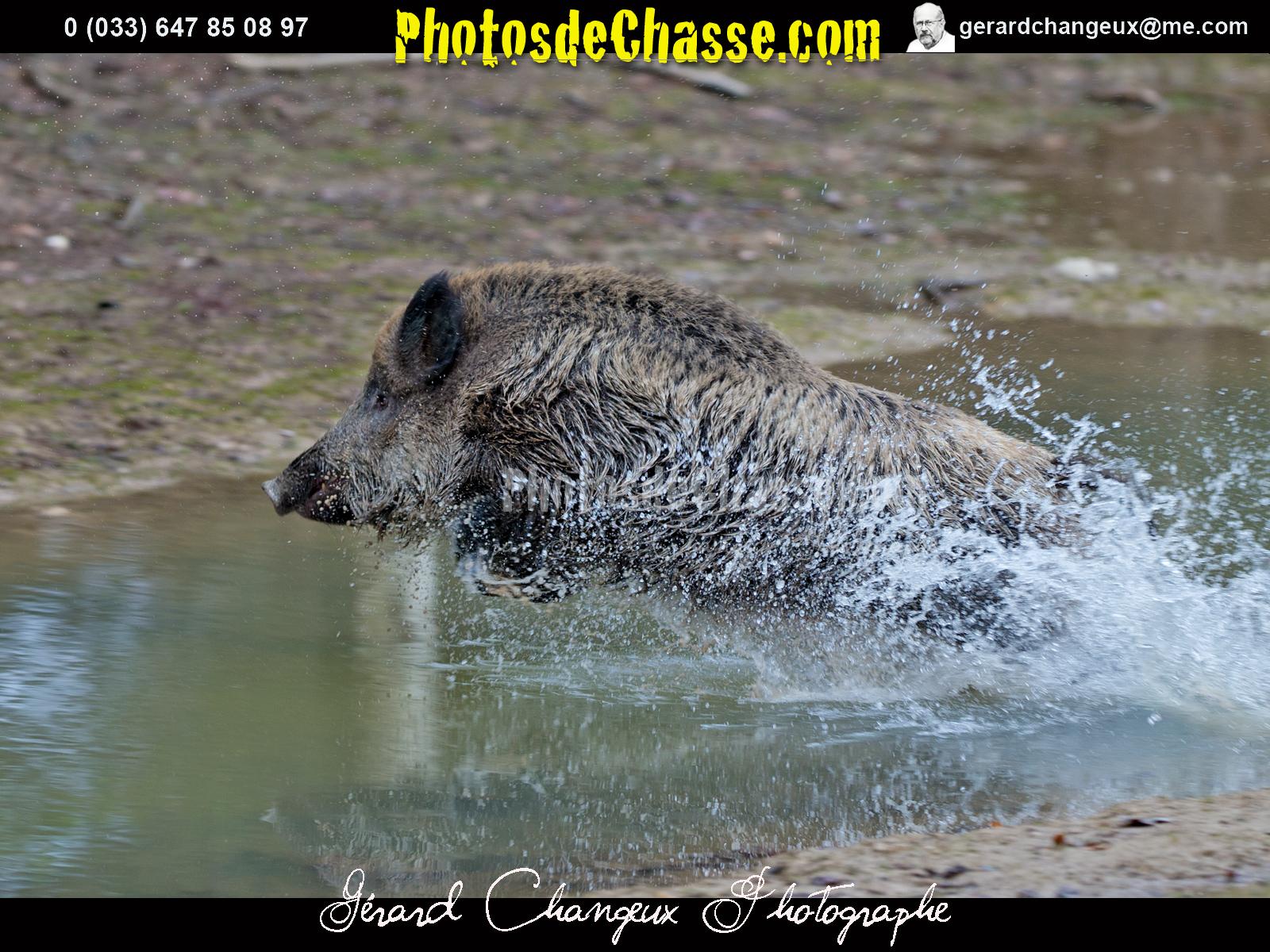 Le blog de photos de chasse quelques photos de chasse au - Cuisiner le sanglier au four ...