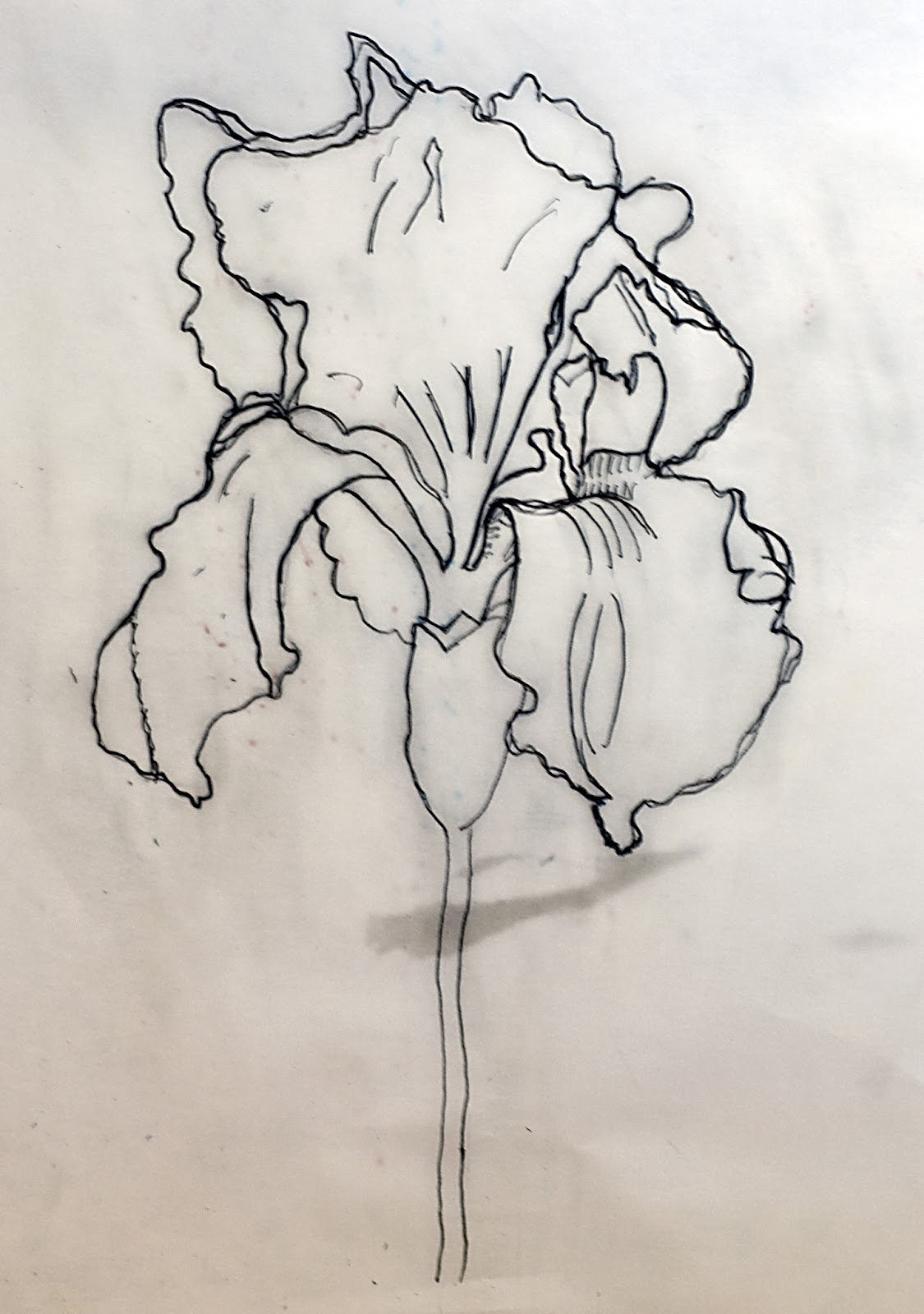 Line Drawing Iris Flower : Cathartic creativity more colored pencil work