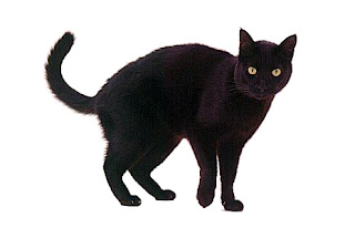 Funny Dead Black Cat