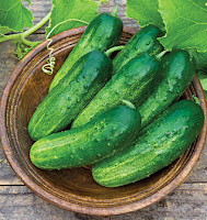 Salad-Slicer Cucumbers