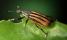 أجمل صور عن الحشرات
