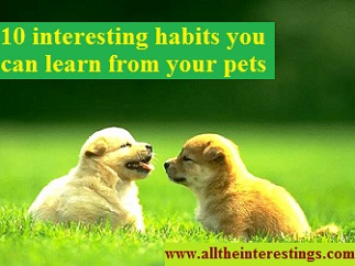 10 interesting habits you can learn from your pets, Things You Can Learn from Your Pets, behaviour improvement plan, behaviour management