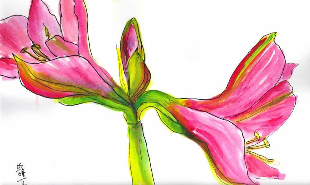 Martine paquet amaryllis pour le jour 9 du d fi for Garder un amaryllis