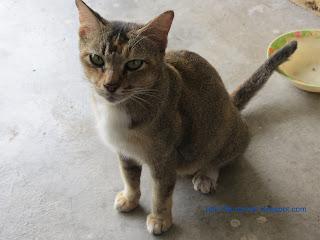 kucing, haiwan, comel, manja, dari, sudut, pandang, curang, seks, kesayangan, Rasulullah, Gendut, kejam, manusia,dan, pada