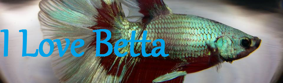 I Love Betta Fish