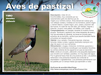 Fichas aves del pastizal