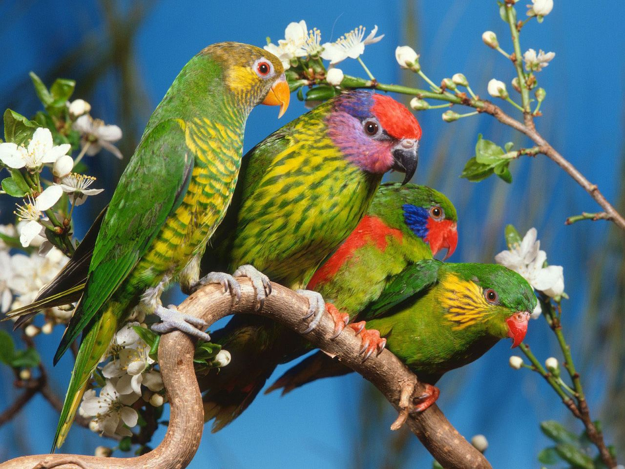 http://2.bp.blogspot.com/-5pyfoMGO7W4/TckKc5OZB0I/AAAAAAAAIh8/4XGIqJLLRKE/s1600/Beautiful+Colorful+Cute+Birds+Wallpapers+%25282%2529.jpg