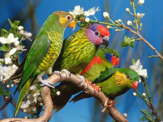 foto burung @ www.digaleri.com
