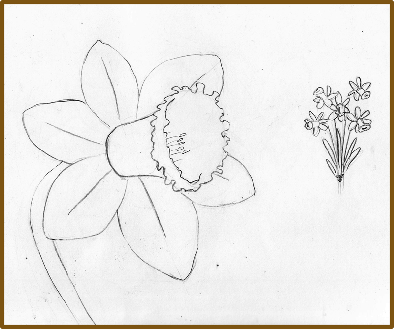 weekly doodles and tuts how to draw a narcissus