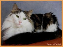 CH Boreas Land Cat Spell*Pt