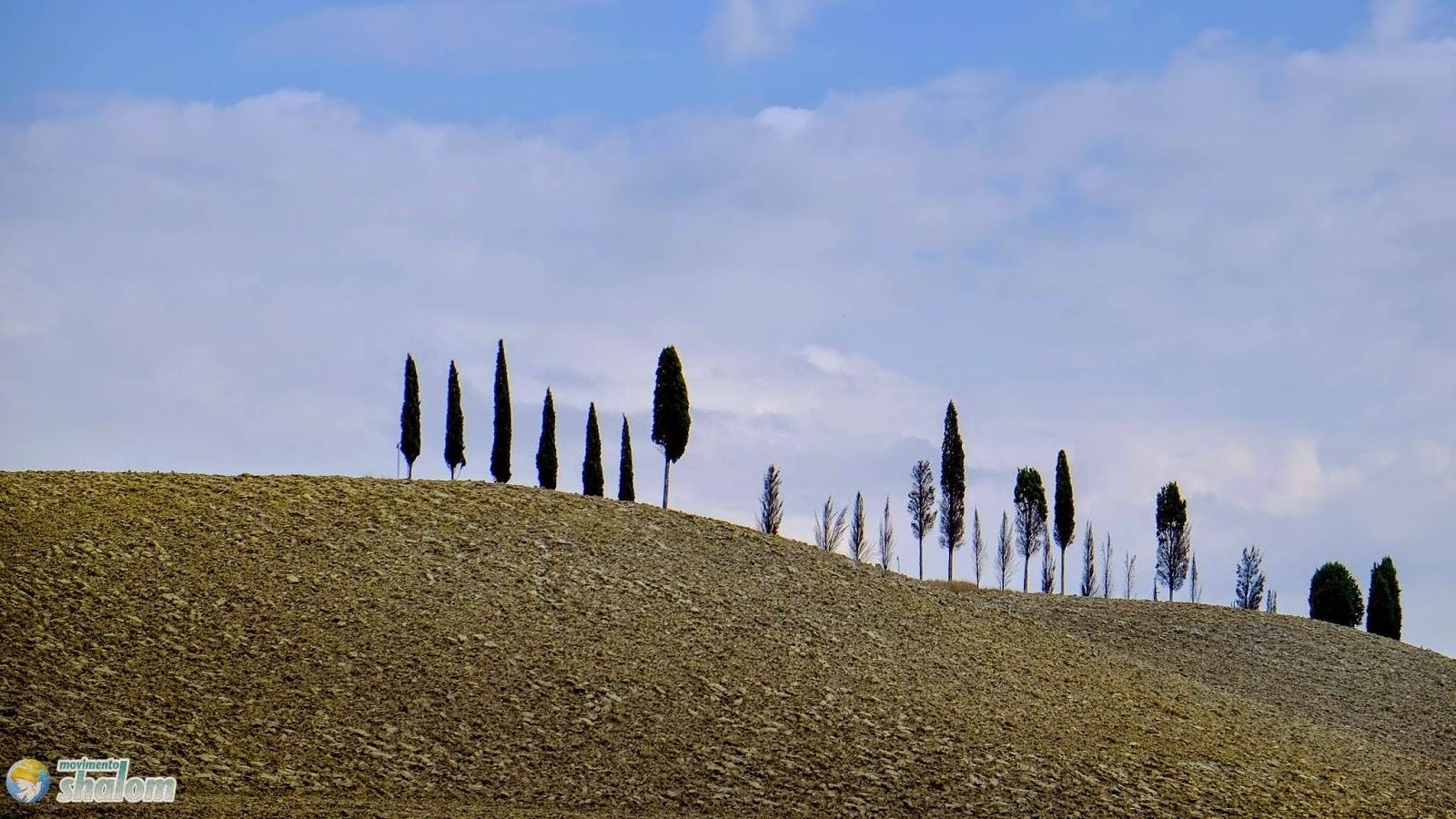 cipressi sulle colline toscane