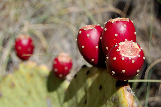 The extract from the nopal cactus has been used as an ingredient in nutritional products.