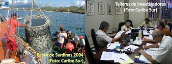 Informe Ley de Pesca Venezuela 2008