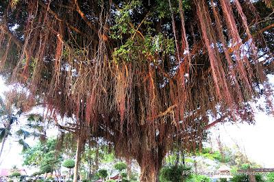 Pokok unik