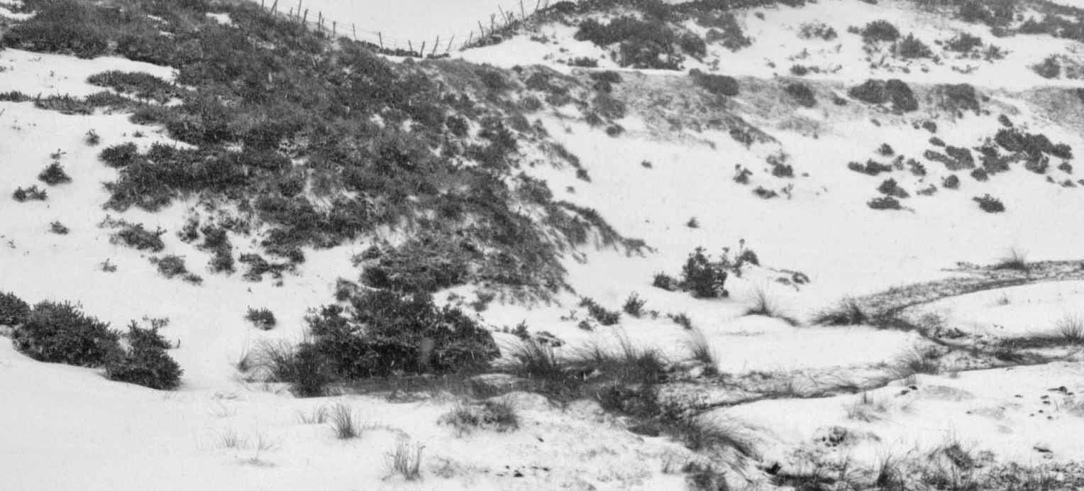 Derrota del ejercito de napoleon por el frio