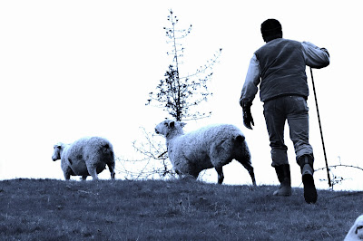 The Reluctant Shepherd (re-posted)