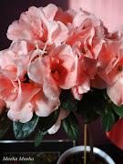 The azalea will not survive the last hot days of May, so I may as well enjoy . (azalea light)