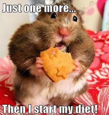 Just One More... Then I Start My Diet! Chubby hamster eating a cookie.