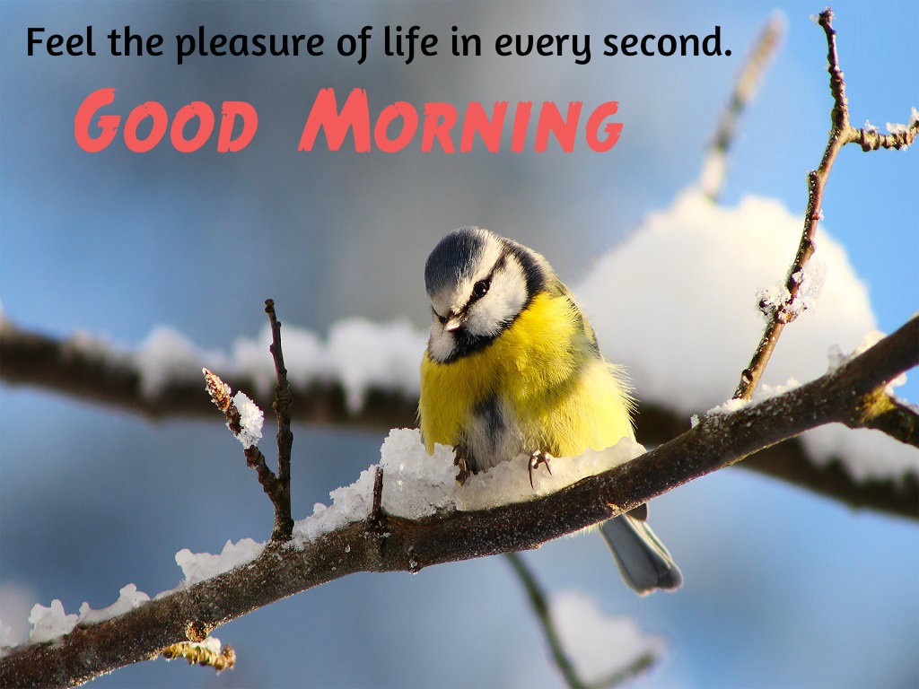 Love Birds Good Morning Wallpaper : Good Morning Wishes with Love Bird Free Download Festival chaska