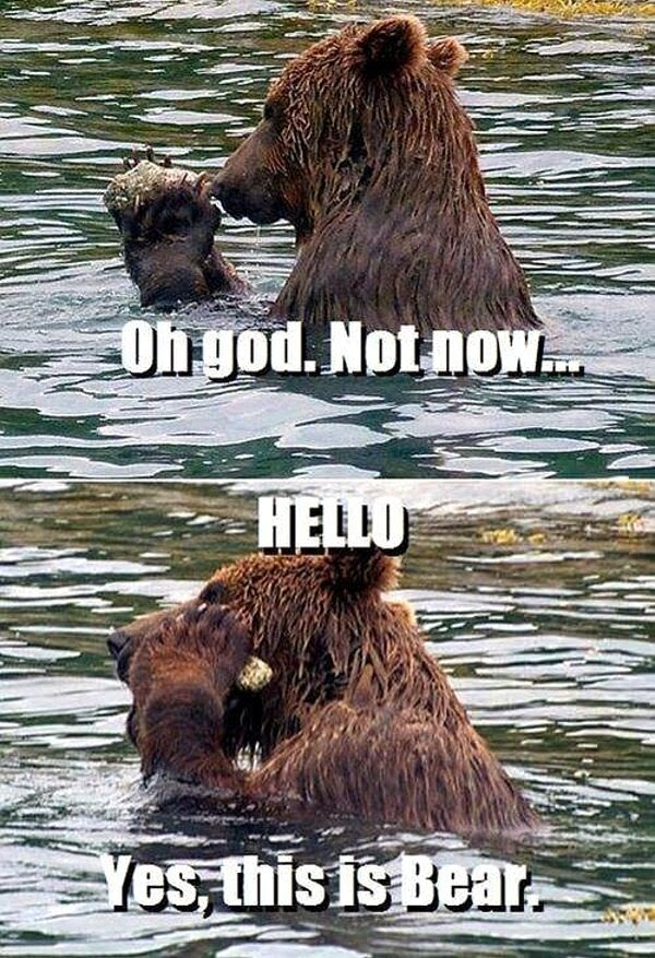 30 Funny animal captions - part 19 (30 pics), bear with caption, yes this is bear