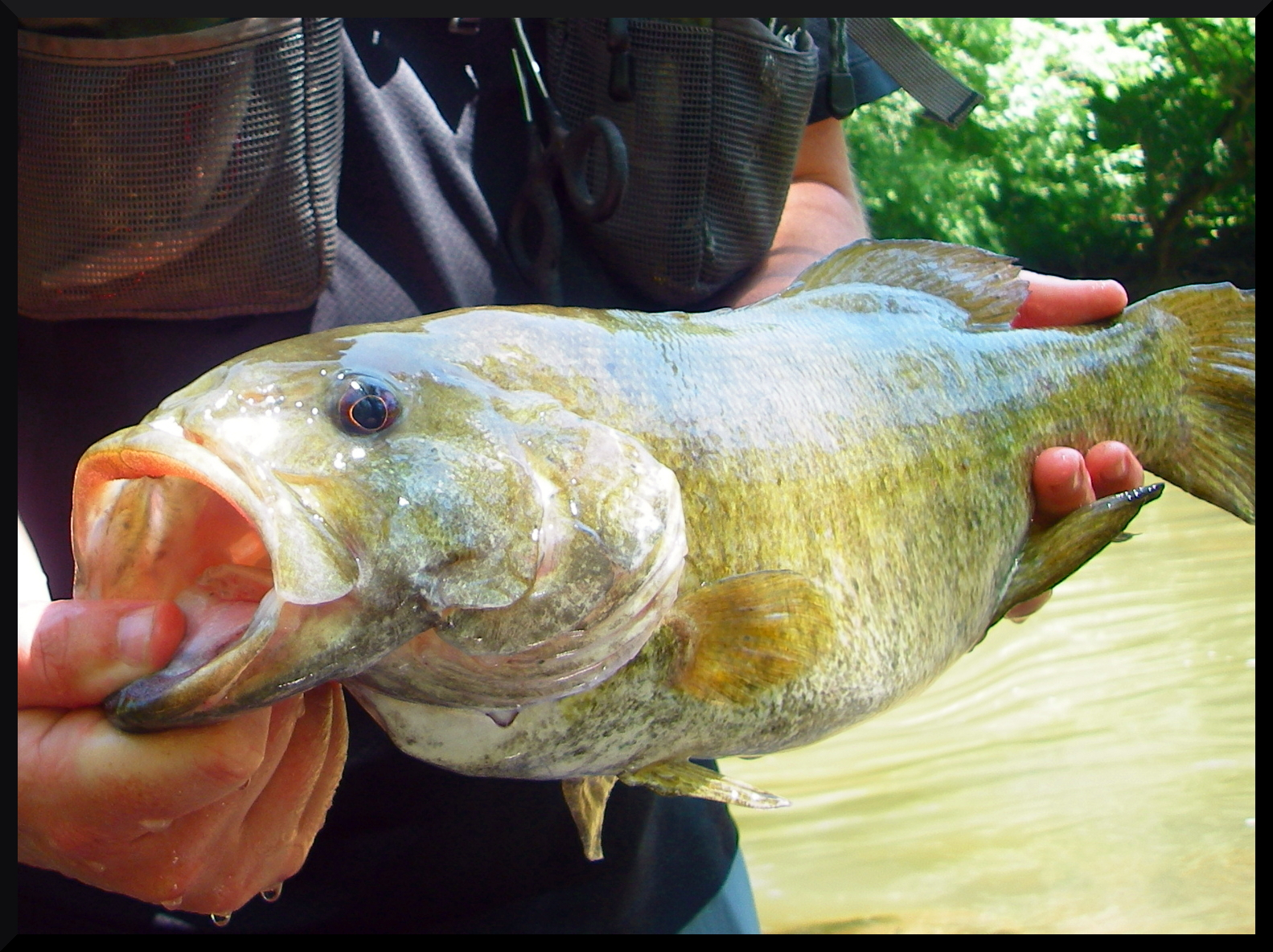 Smallmouth in your soup smallmouth bass in indiana where for Fish in indiana