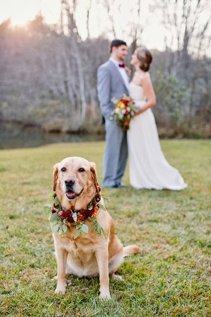 blomsterkrans hund, bröllop blommor hund, blomsterkrans husdjur, wreath dog, wedding flowers pet, wedding  flowers dog