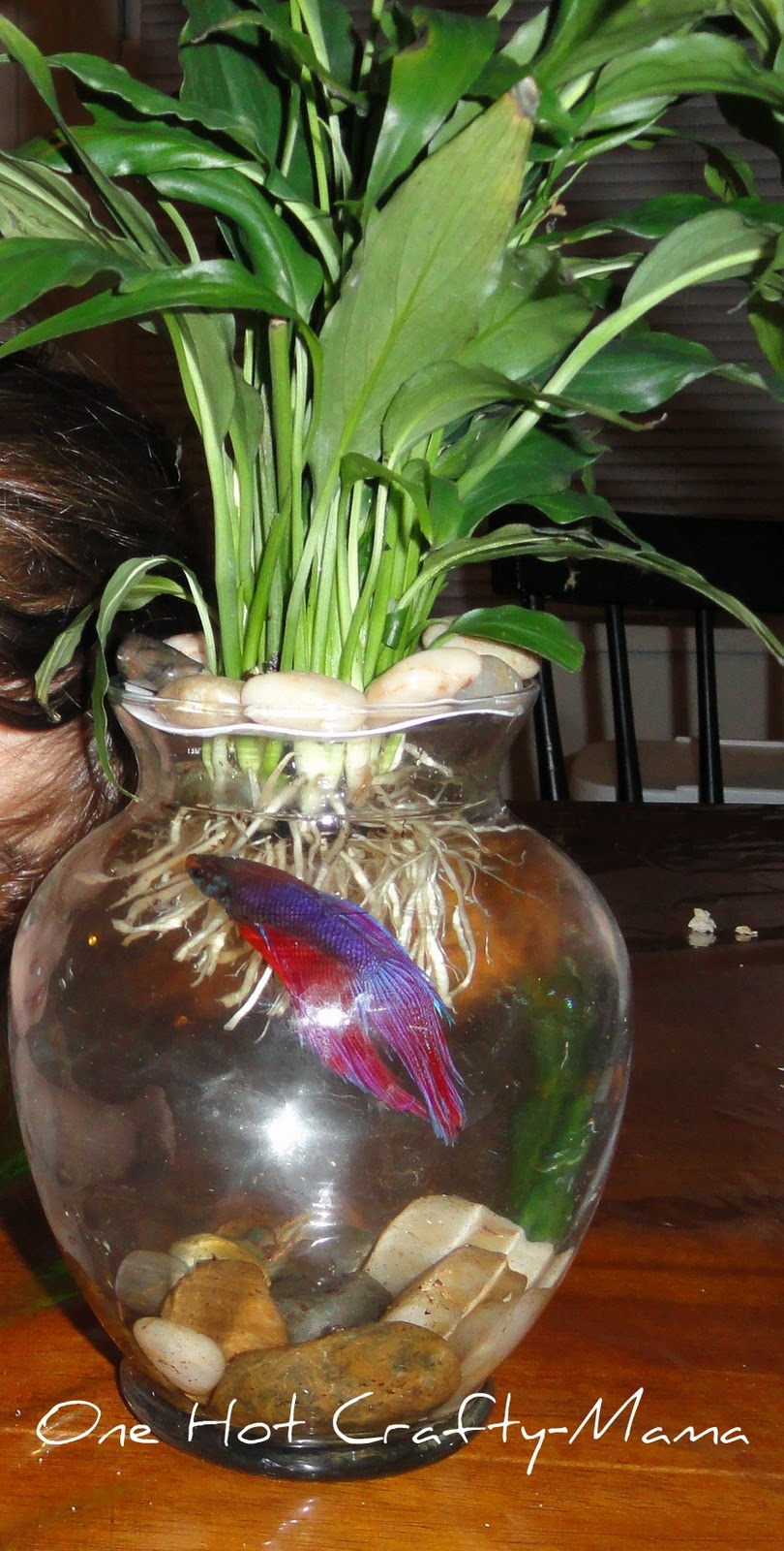 My beloved cable large peace lily betta vase don 39 t get for Peace lily betta fish