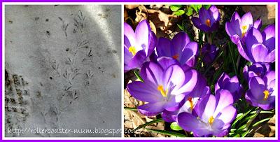 birdie footprints in the snow