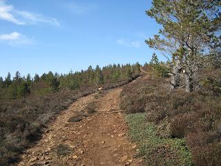 Near the top of the Creagan Riabhach walk, Deeside