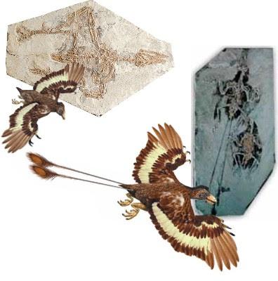 aves raras y prehistoricas Confuciusornis