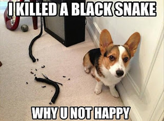 I killed a black snake Why U not happy
