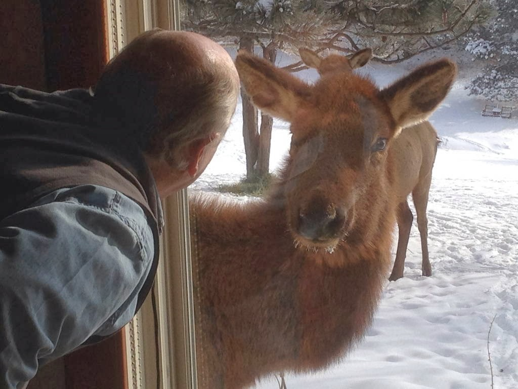 Funny animals of the week - 7 February 2014 (40 pics), curious elk looking to a man through window