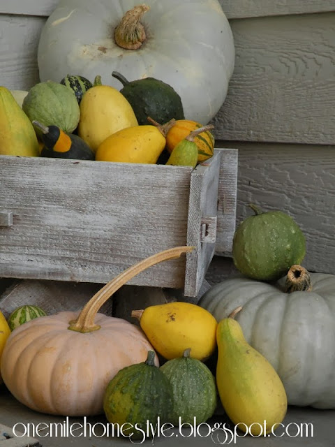 Planter full of fall gourds