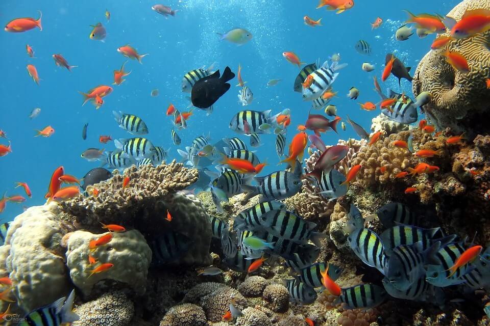 Enjoying the Therapeutic Benefits of Having an Aquarium at Home