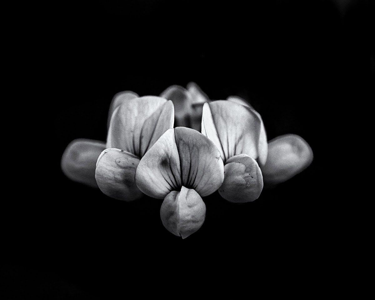 Backyard Flowers In Black And White 5