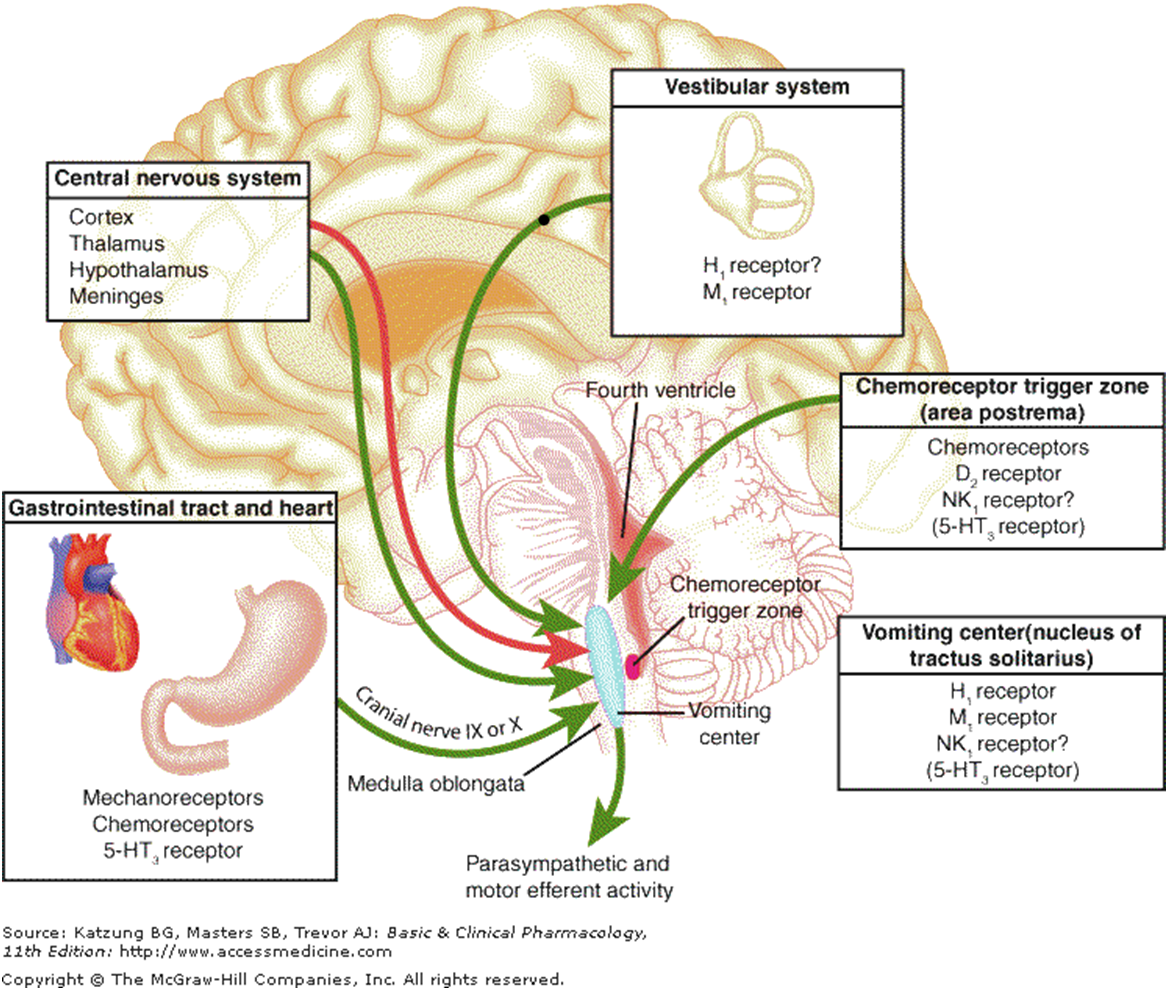 Vomiting How does it occur the receptors and areas