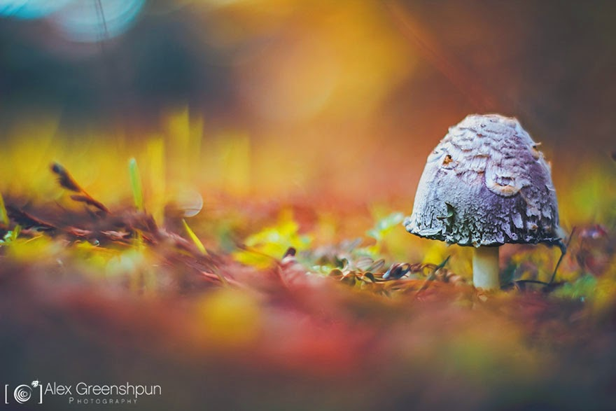 White mushroom photograph