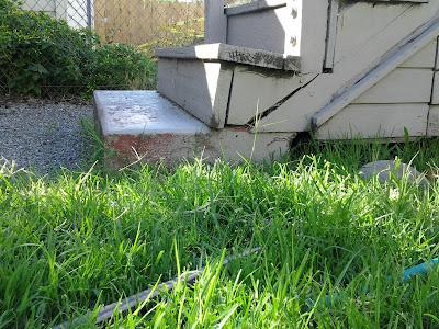 how to grow bermuda grass fast
