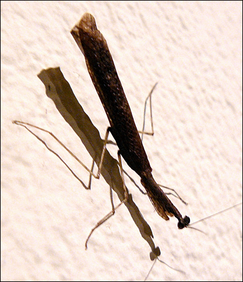 Small brown praying mantis on wall. A Dull Roar   Moving to  Retiring in  Living with Costa Rica  Don