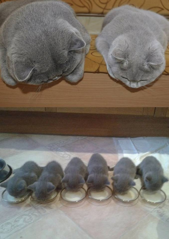 cute kitten family