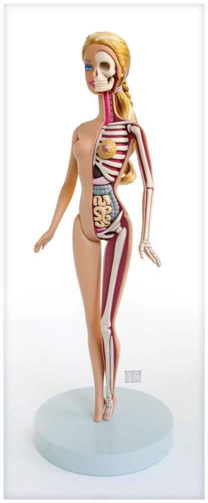 Milerenda: Anatomía comparada