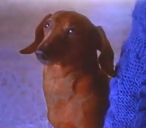 Famosa campanha com o cãozinho da Cofap, apresentada em 1994.