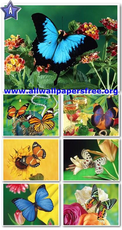 110 Beautiful Butterflies Wallpapers 1600 X 1200