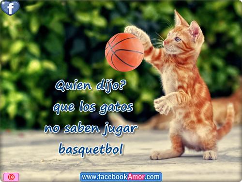 Imagenes graciosas de gato jugando basquetbol - Imágenes Bonitas para