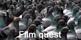 Film quest