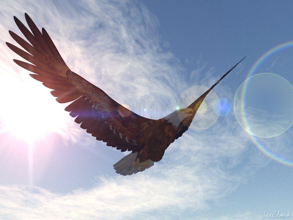 http://2.bp.blogspot.com/-5vcjRV9xeW4/T_Q2anJYuNI/AAAAAAAADzY/g1IUZO3QtHw/s1600/Bald+eagle+wallpapers+4.jpg