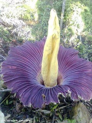 10 Tumbuhan TerGanas dan TerUnik di Dunia