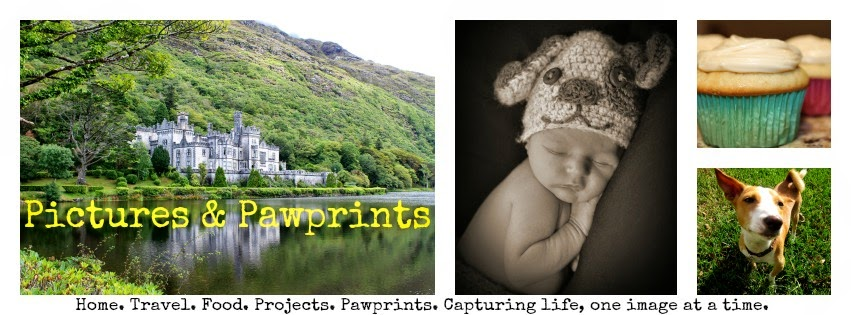 Pictures & Pawprints